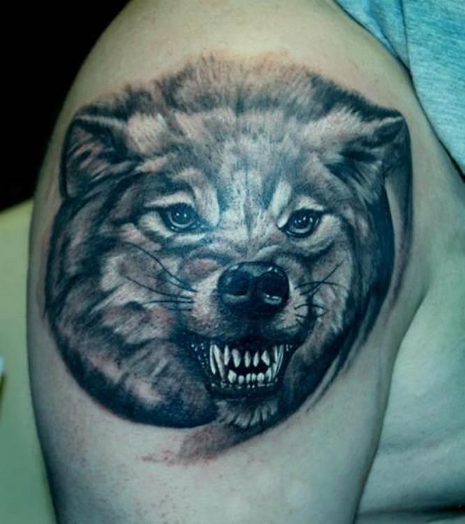 Волк с оскаленными клыками