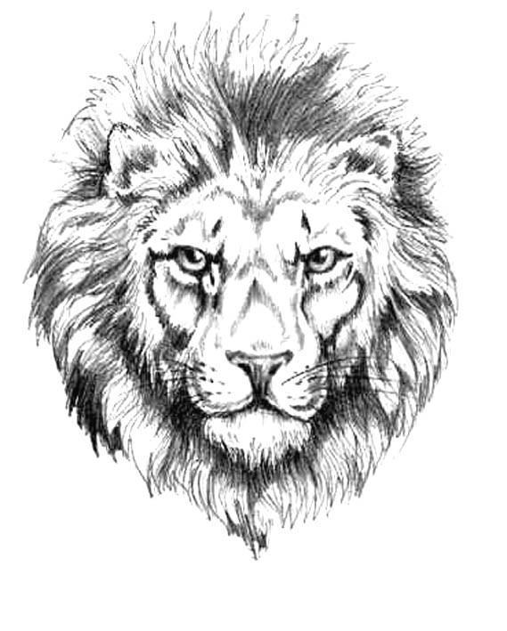 эскиз льва: