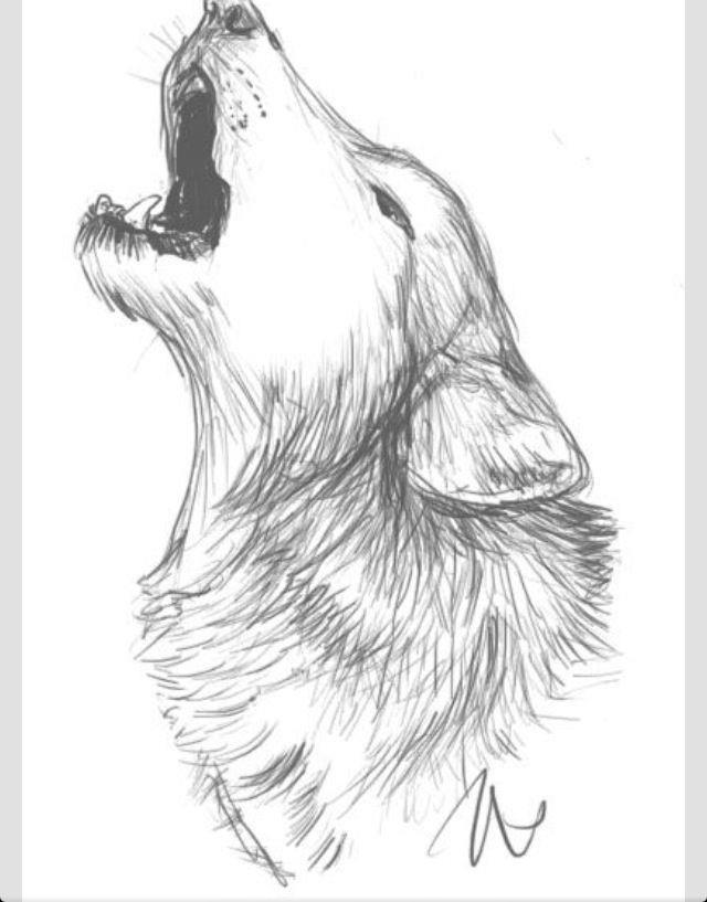 фото волка в ночи